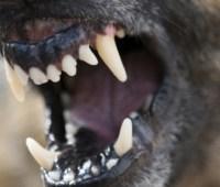 В Николаеве — карантин: количество пострадавших от укусов бешеного пса растет