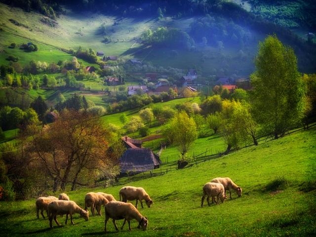 Zona Transilvania