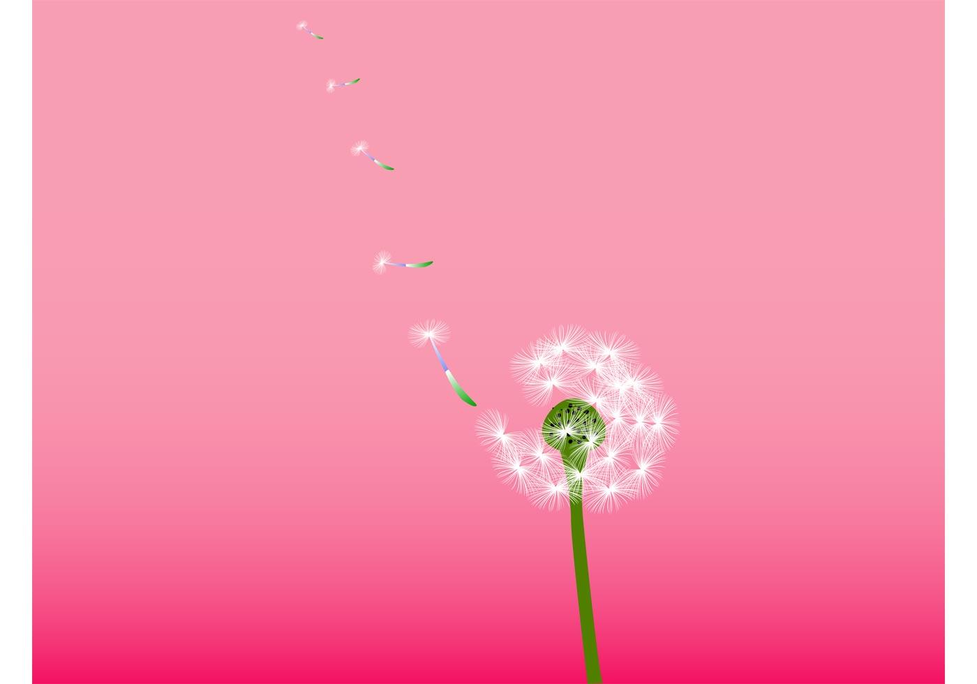 Dandelion Vector Download Free Vector Art Stock Graphics Amp Images