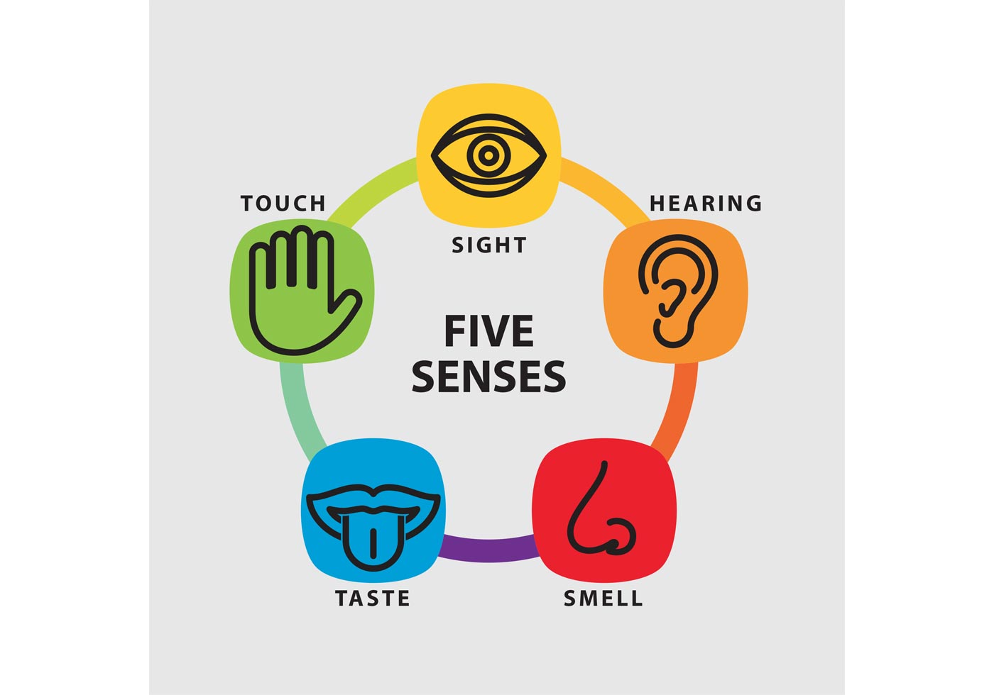 Five Senses Vector Infographic