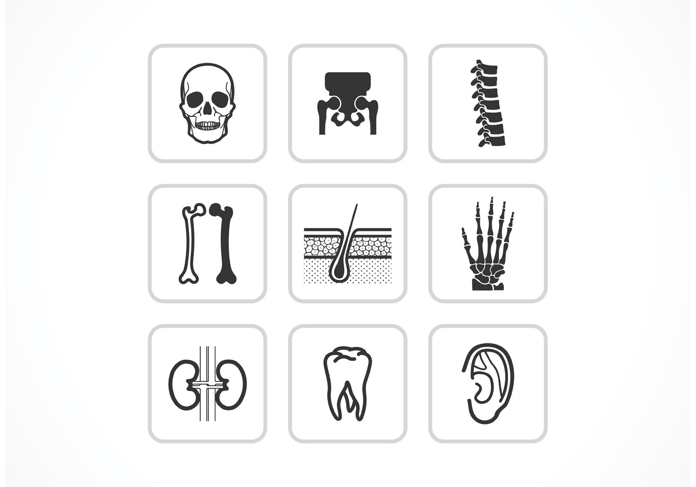 Free Bones And Joints Vector Icons