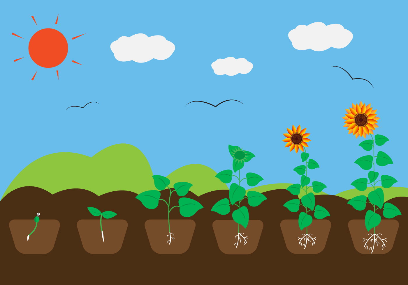 Plant Growth Cycle In Pictures
