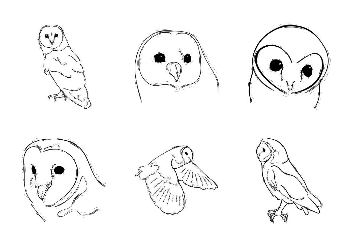 Free Barn Owl Vector Illustration