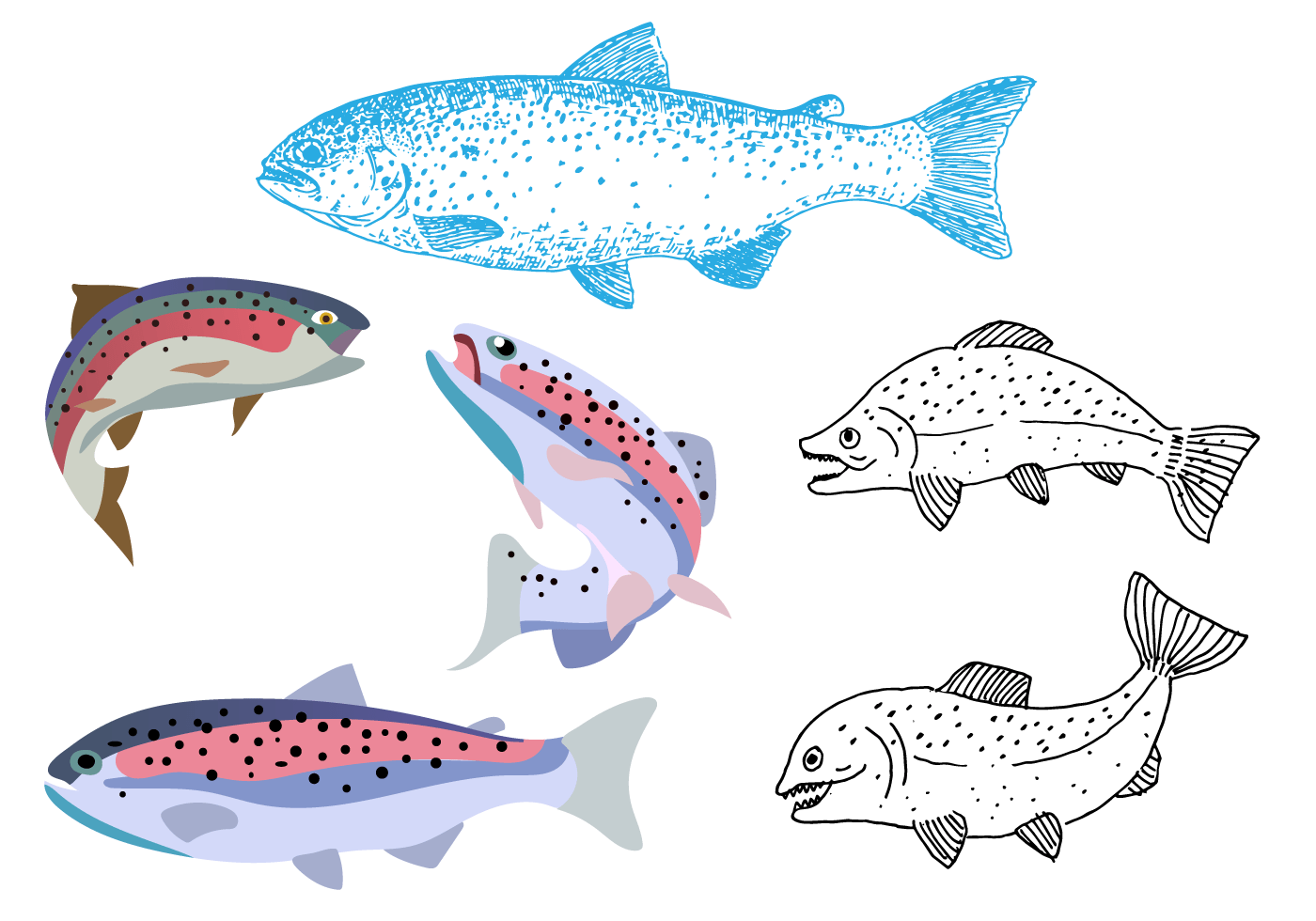 Hand Drawn Rainbow Trout Vector