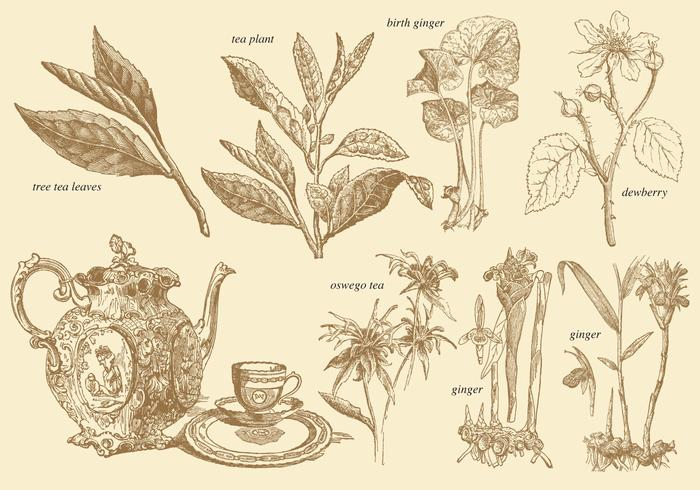 Old Style Tea Plants Download Free Vector Art Stock