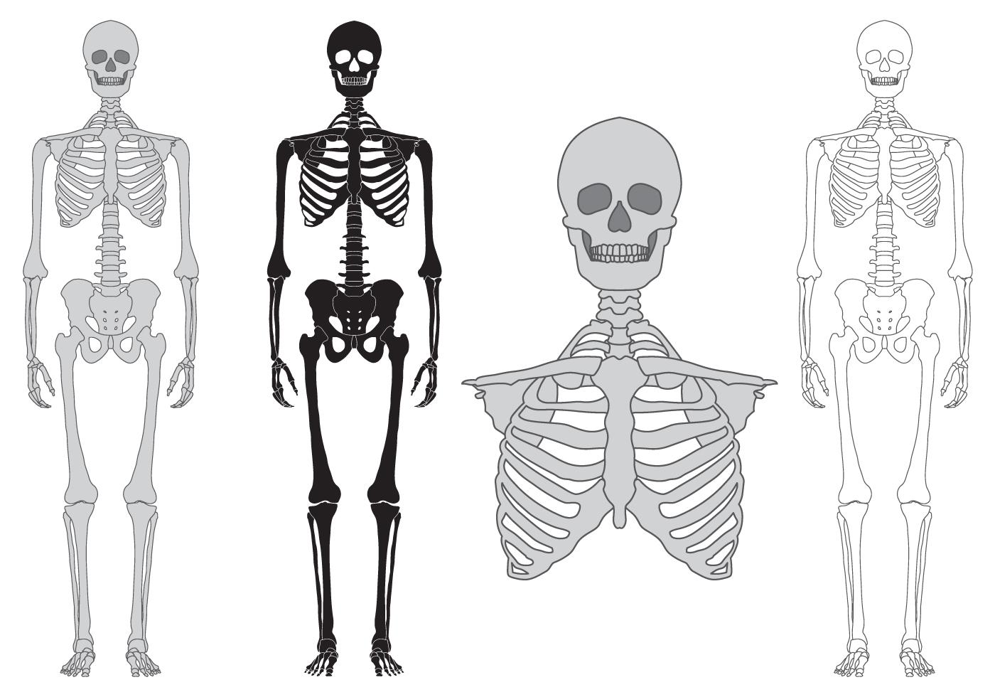 Skeleton And Bones Vector Set