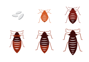Free Bed Bug Vector  Download Free Vector Art, Stock Graphics & Images