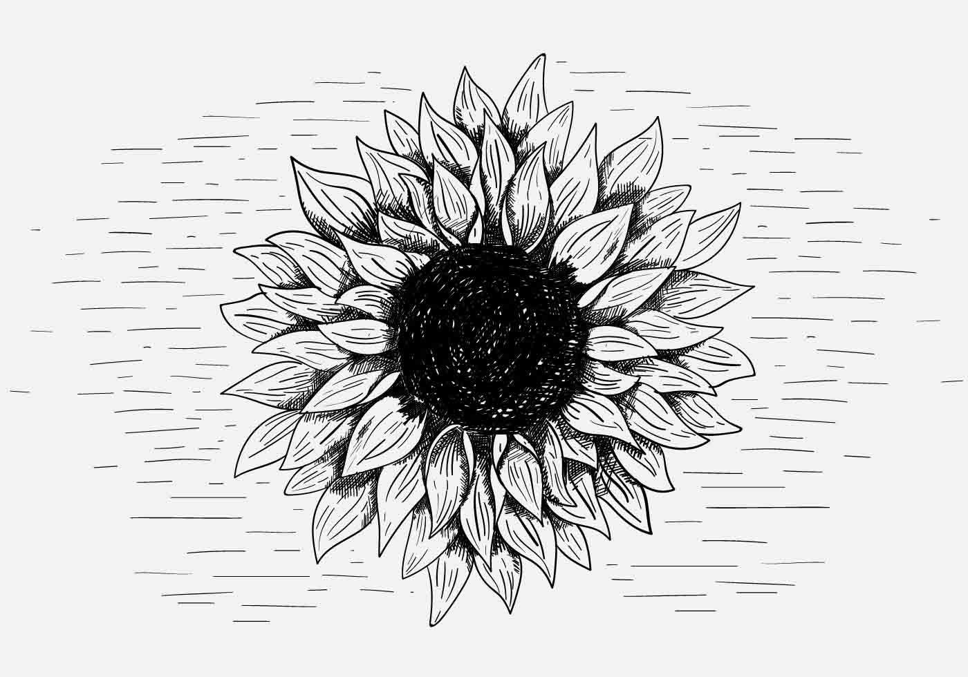 Vector Sunflower Illustration