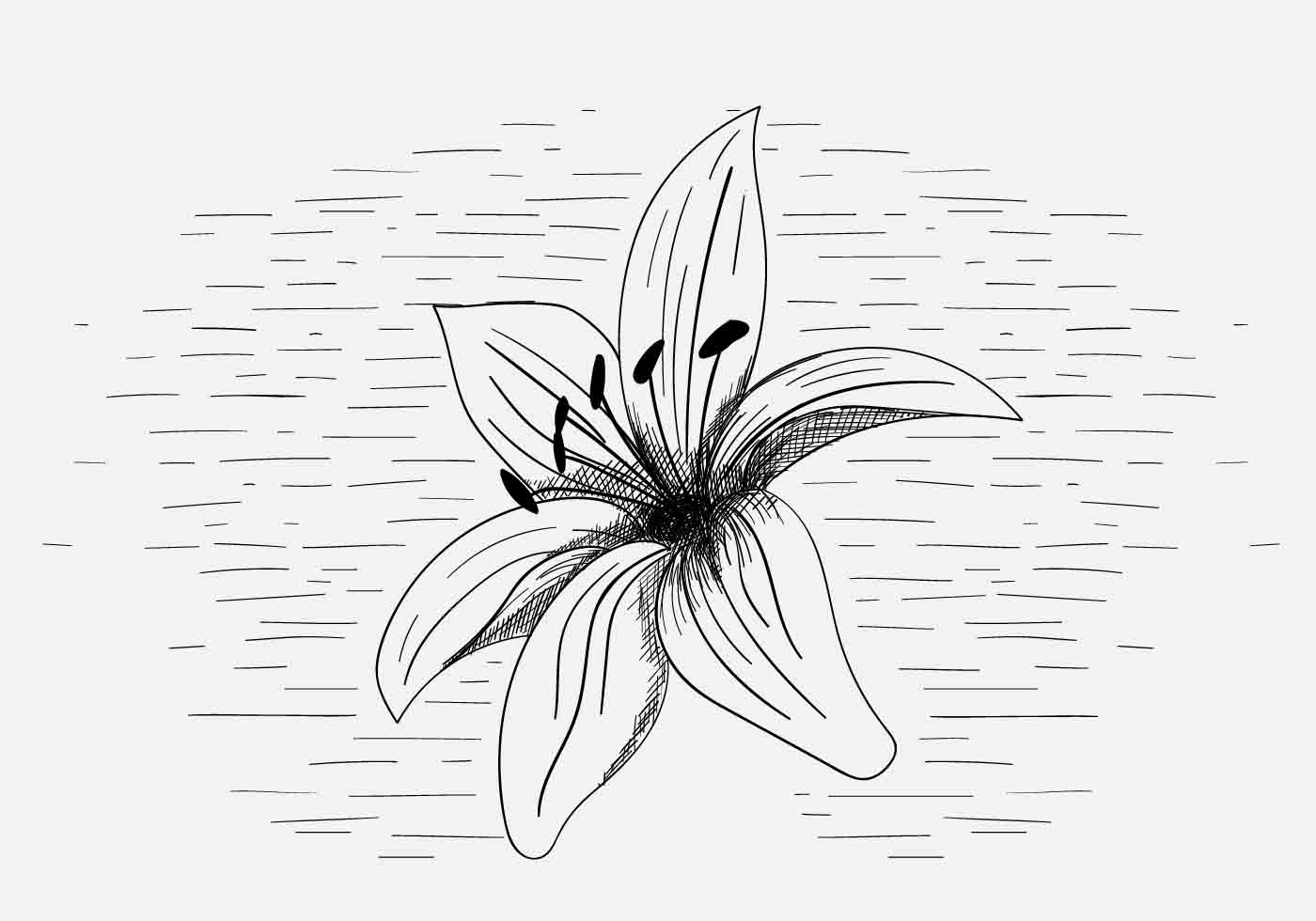 Lily Free Vector Art