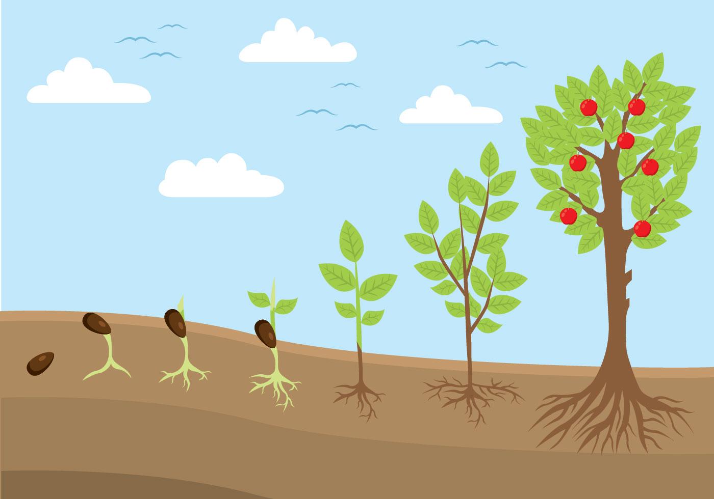 Plant Life Cycle Illustration