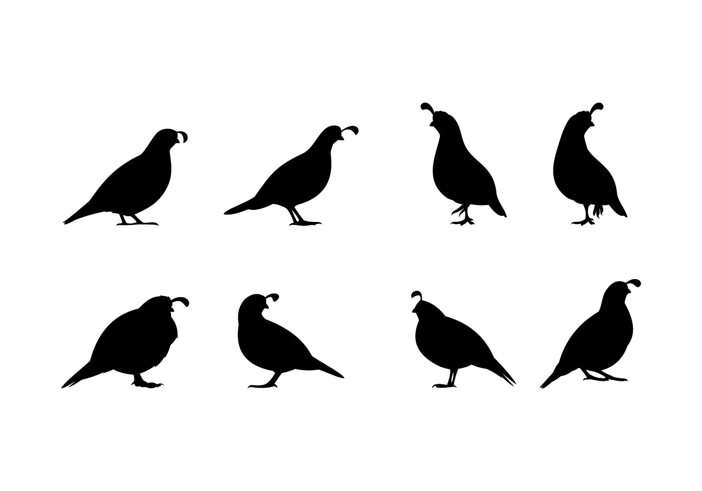 Standing Quail Silhouette Free Vector