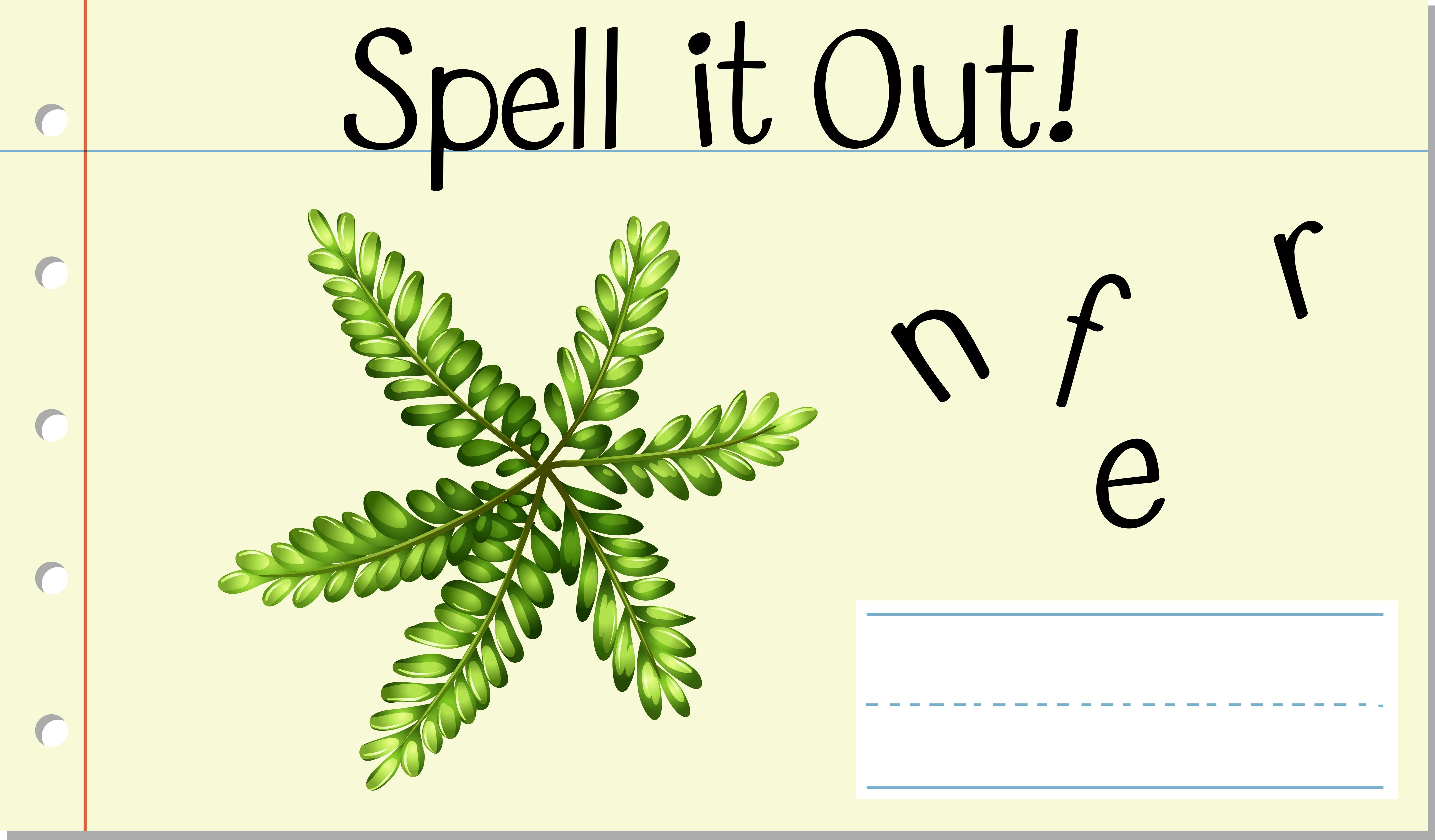 Spell English Word Fern