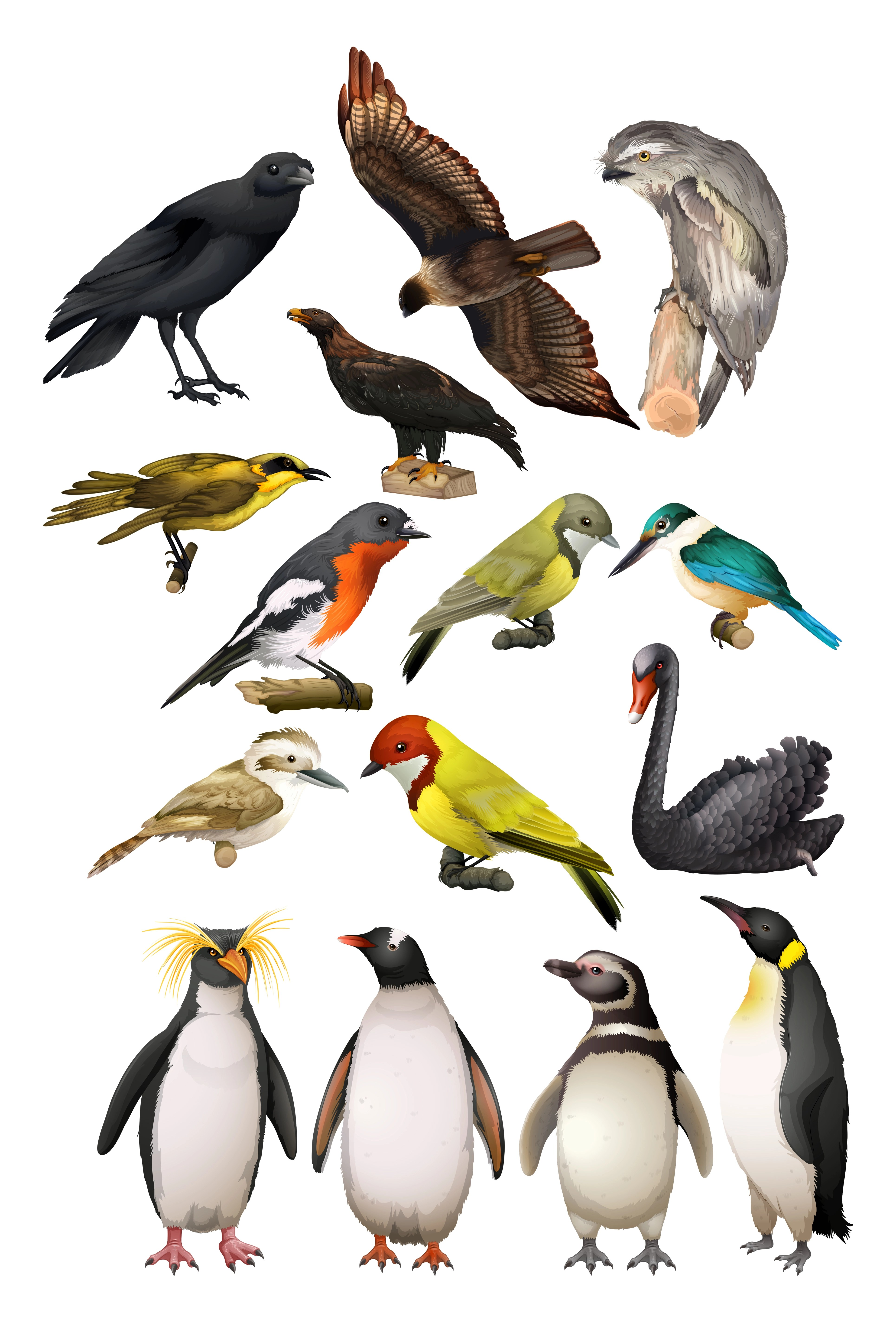 Different Kind Of Birds