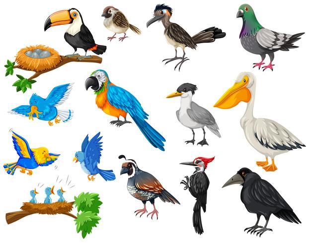Conjunto de diferentes tipos de aves. - Descargar Vectores Gratis,  Illustrator Graficos, Plantillas Diseño