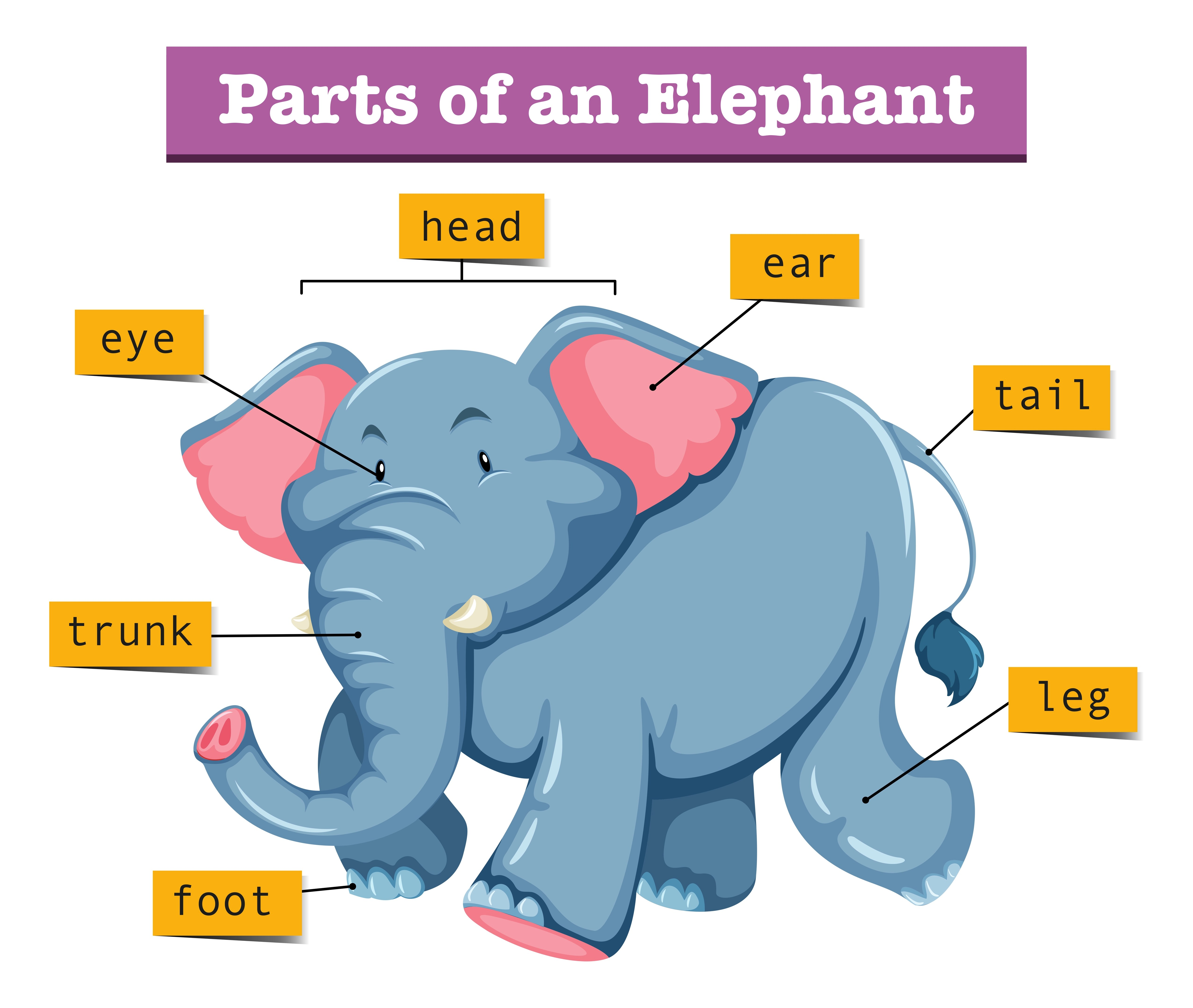 Diagram Showing Parts Of Elephant