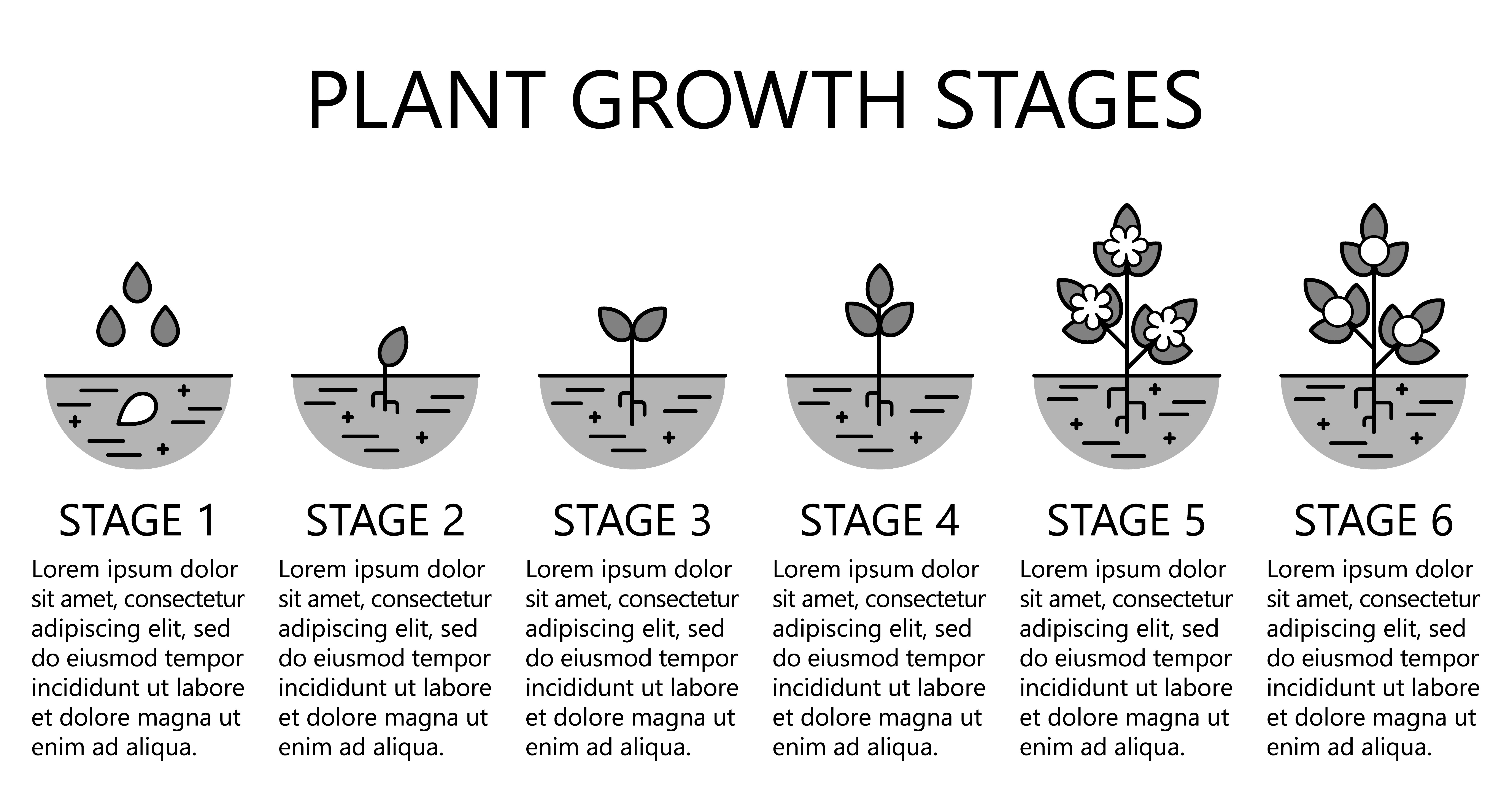 Plant Growth Stages Infographics Monochrome Line Art
