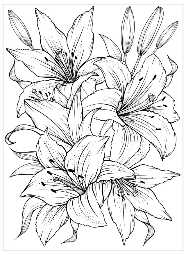 Coloring page with Lilies and leaves. Vector page for coloring