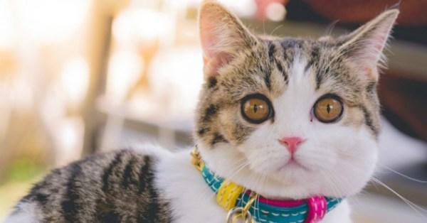 Choisir un chat mâle ou femelle ? - Quel chat acheter ...