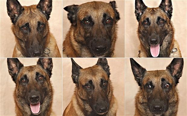 Les hommes sont capables d'identifier les émotions ds chiens