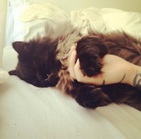 chat abandonné chat star du web
