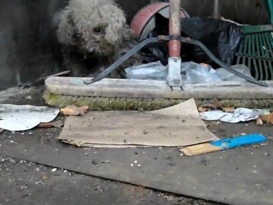 chien abandonné sauvé sauvetage
