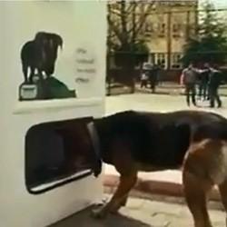 distributeur nourriture chien errant
