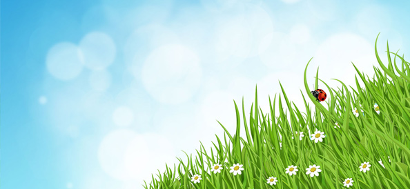 Green Grass Nature Background