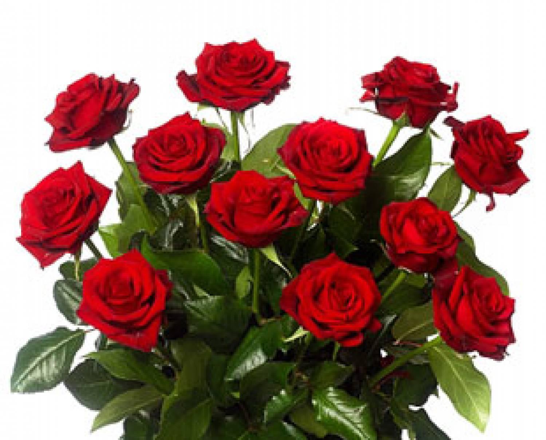 Afbeeldingsresultaat voor prachtige rozen