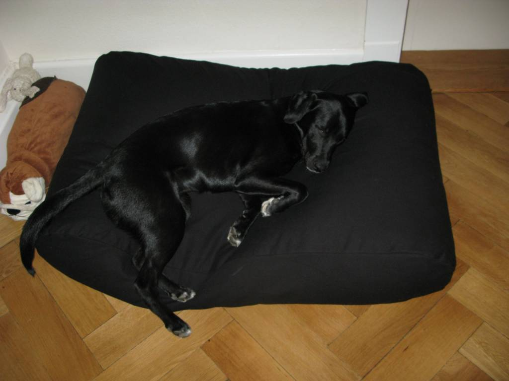 Dog Bed Black Dog Beds By Dogs Companion