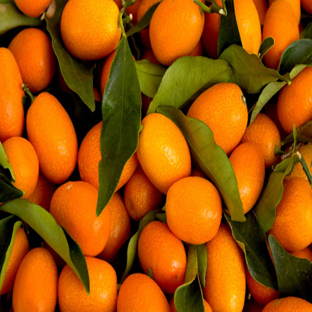 Kumquat   Fruit syrup   Inspire Food Company CLASSIC   Kumquat   Fruit syrup