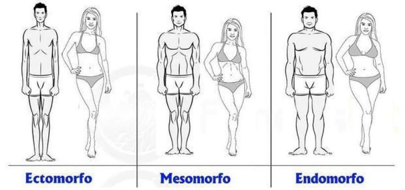 Tipos de cuerpo y metabolismo