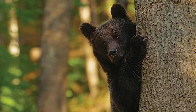 """Résultat de recherche d'images pour """"Echilibru, dans la peau de l'ours Eve Cerubini, Victor Jullien & Jérôme Fatalot photos"""""""