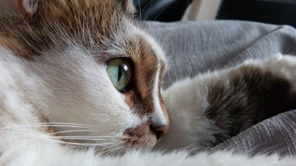 free cat sudbury ontario # 45