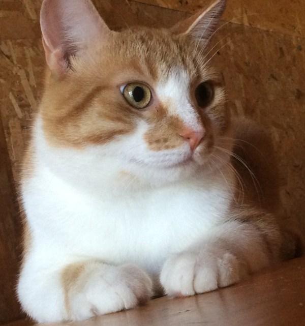 free cat sudbury ontario # 16