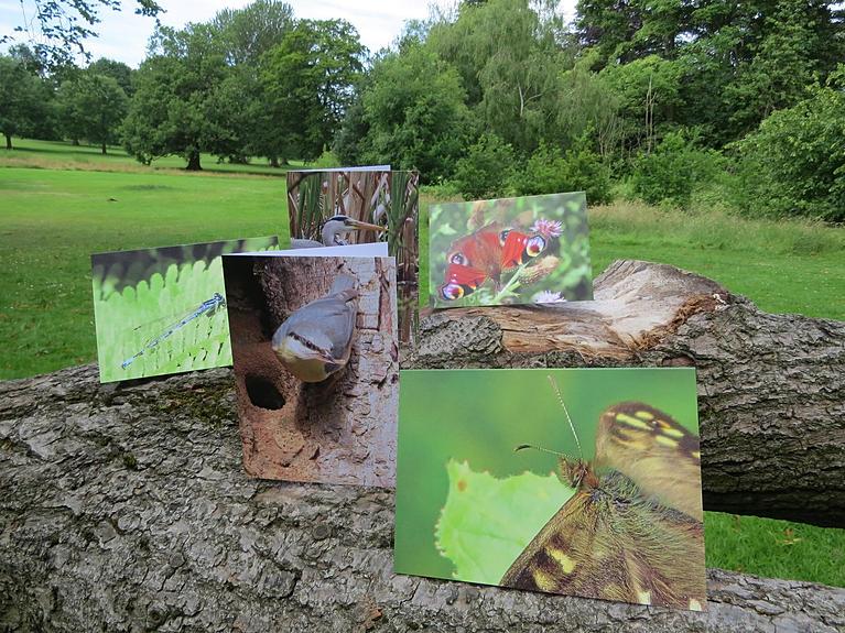 Go Be Wild greetings cards, Barbara Copperthwaite, Go Be Wild