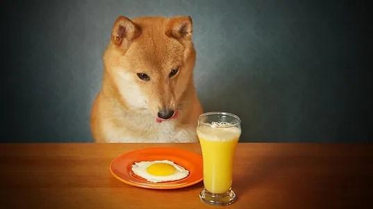 cachorro pode comer ovo