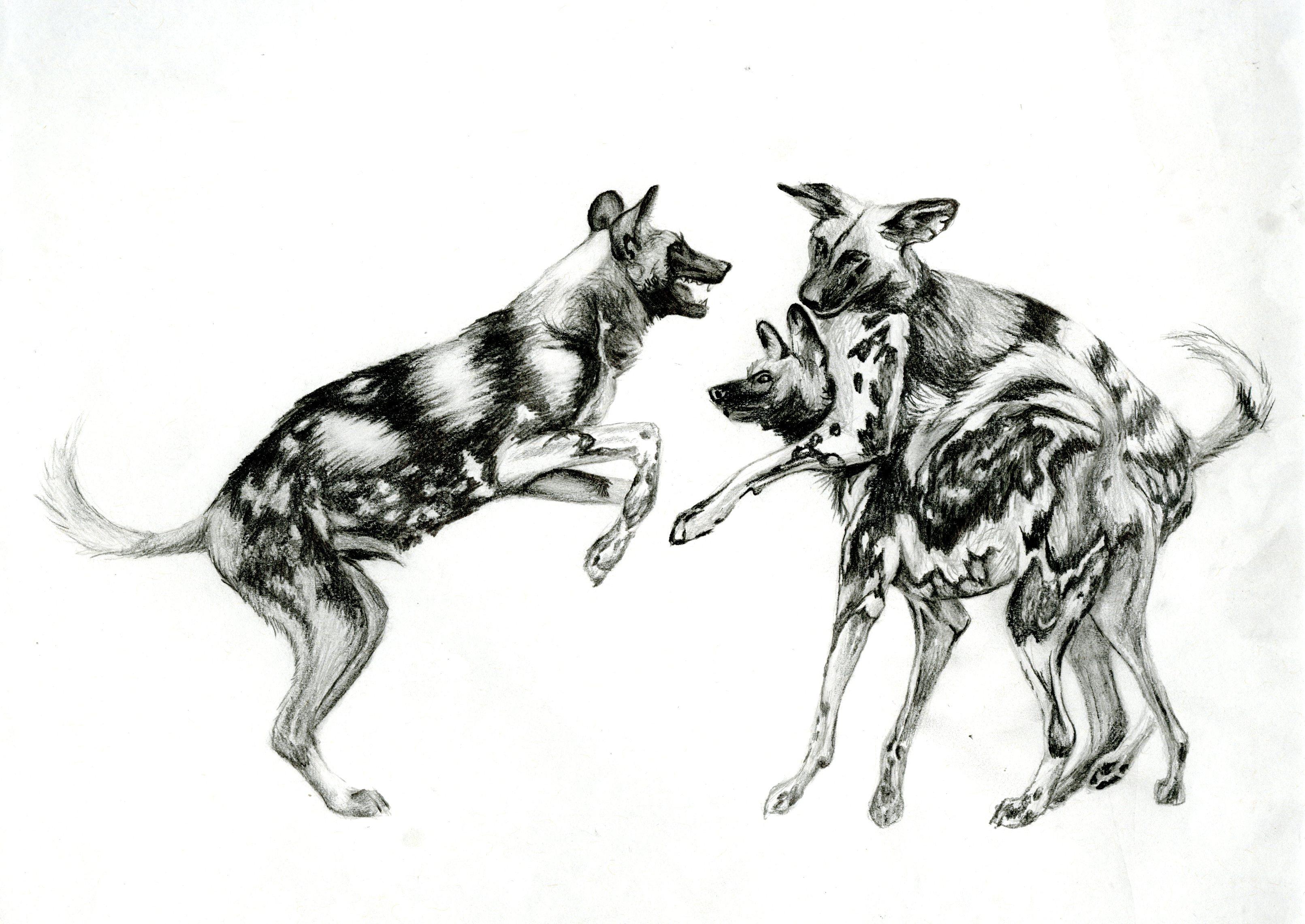 Wild Dogs In Ga