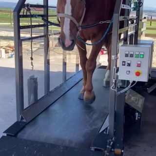 chevaux swiss horse trainer