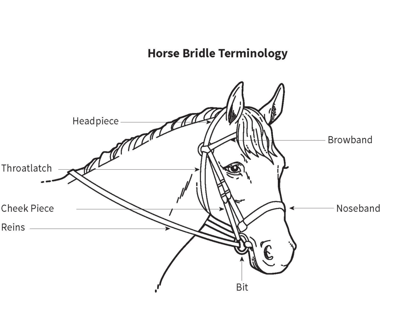 34 Parts Of The Horse Diagram