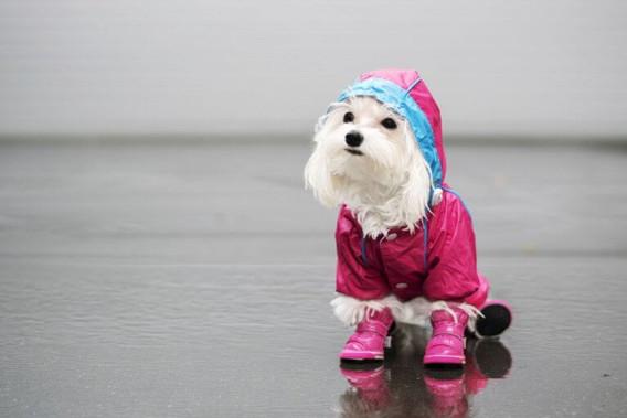 Cuidados Para Não Humanizar Seu Pet