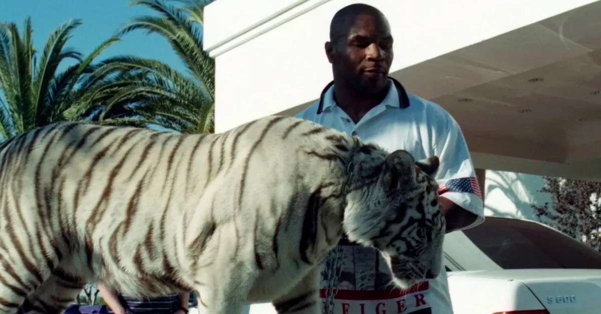 Tiger His Mike And Tyson