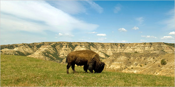 The Great Plains Restored and Ready for Eco-Tourists - The ...