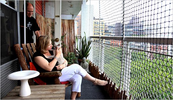 cat s balcony scene on enclosed spaces
