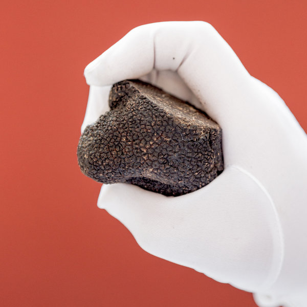 "Since the beginning of 2010, the cultivation for black truffle Truffle Tuber brumale or Winter Truffle began in the United States ""TUBER MELANOSPORUM """
