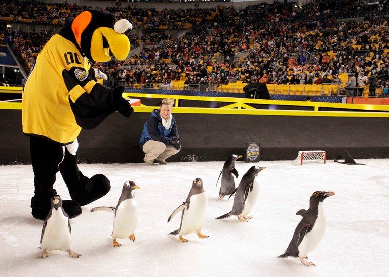 Penguins Hockey Game Live