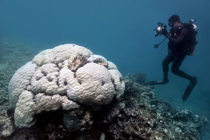 New York Times article: Large Sections of Australia's Great Reef Are Now Dead, Scientists Find