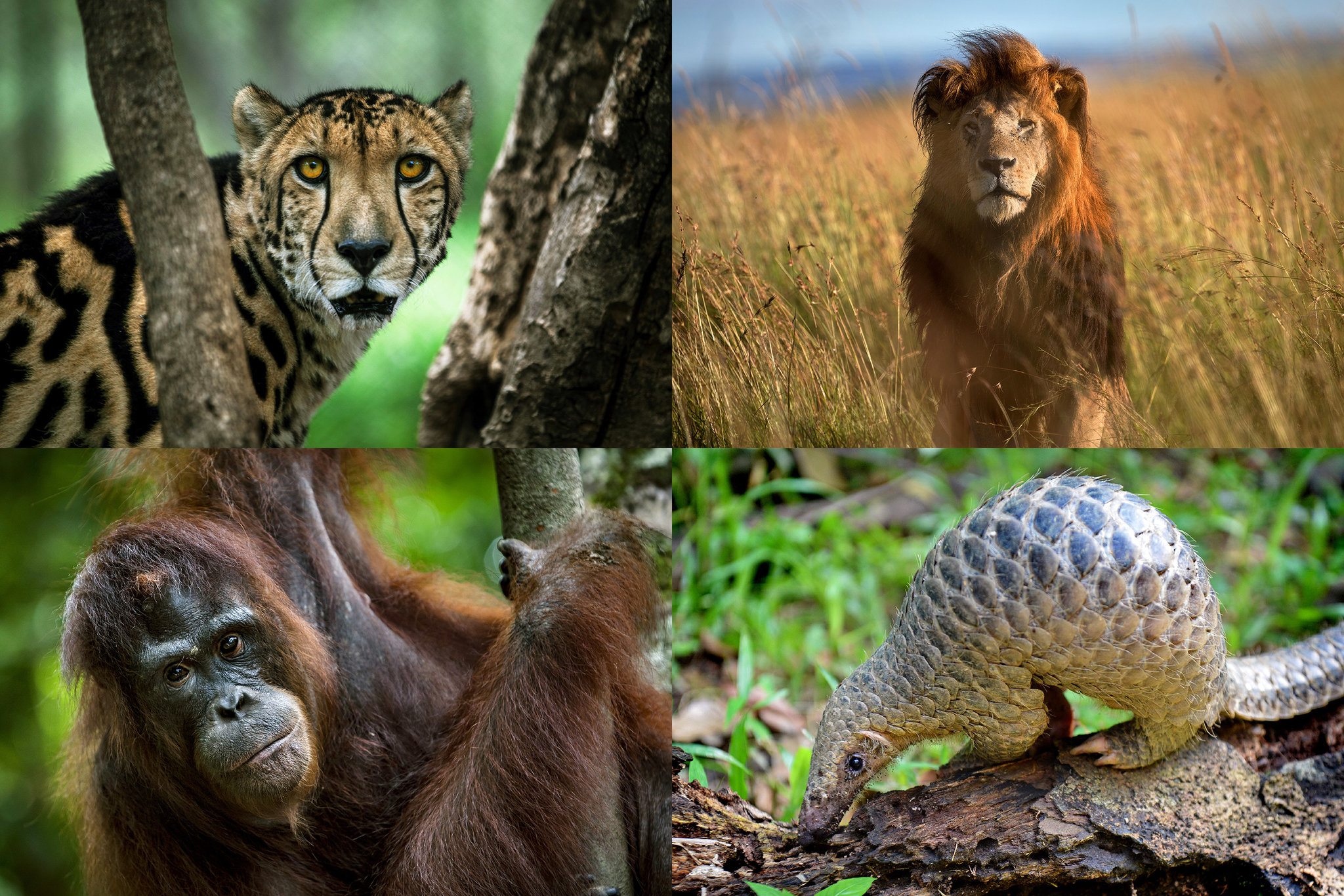 Fighting Extinction Researching And Designing Solutions