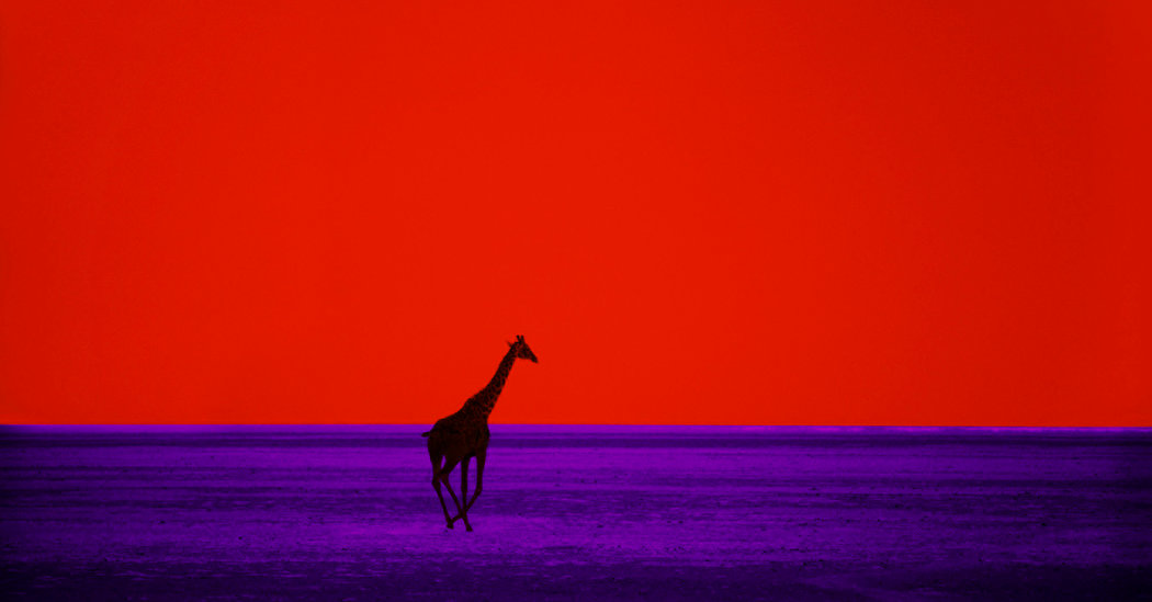 Pete Turner, Whose Color Photography Could Alter Reality, Dies at 83