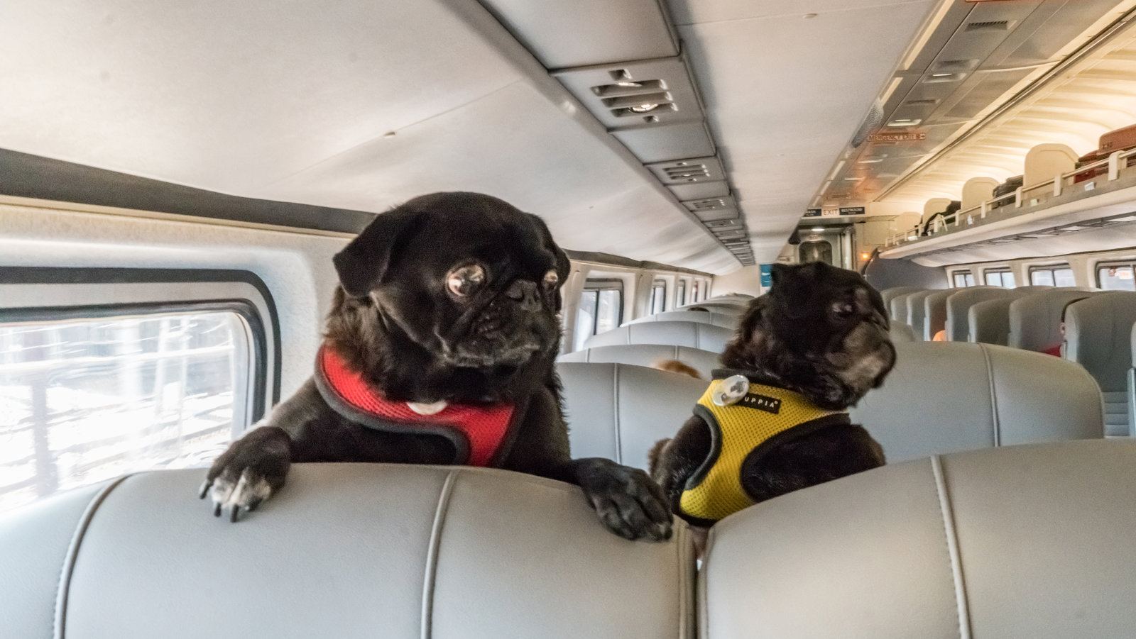 Pups Onboard Why Trains Are A Great Way To Travel With