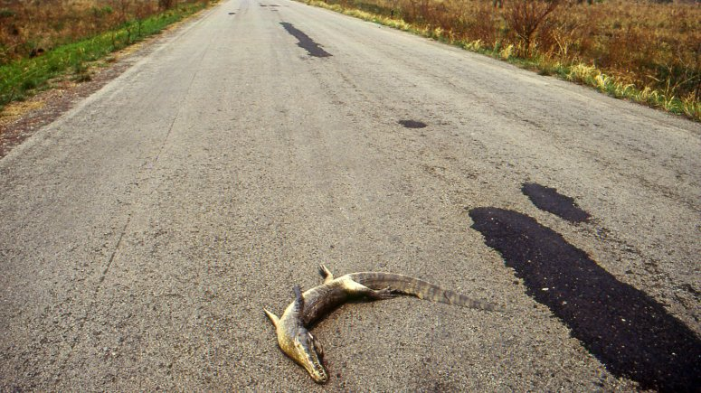 In Brazil, Animals Cross a Road of No Return - The New York Times